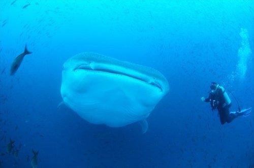 9_yonaguni-island-diving-08_R.jpg