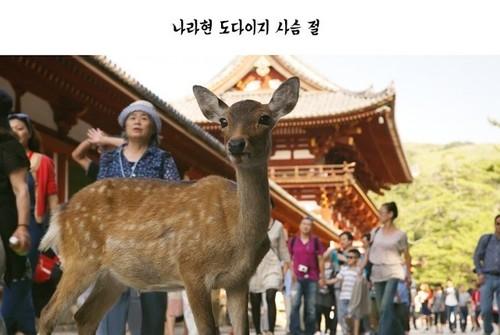 奈良の鹿1.jpg