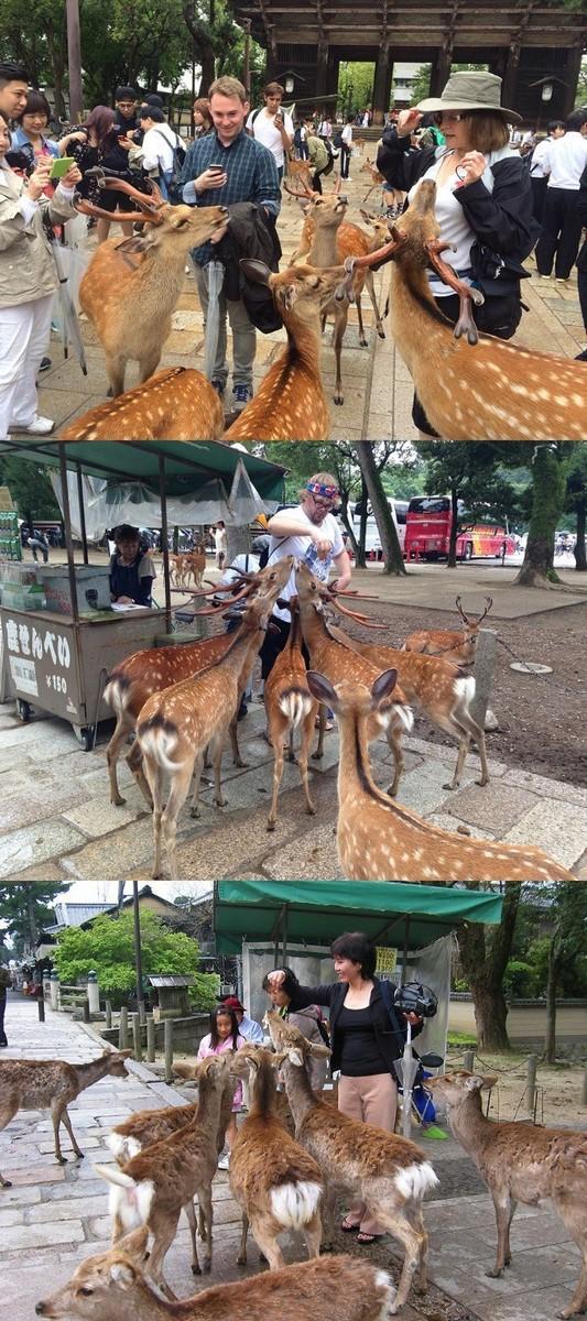 奈良の鹿2.jpg