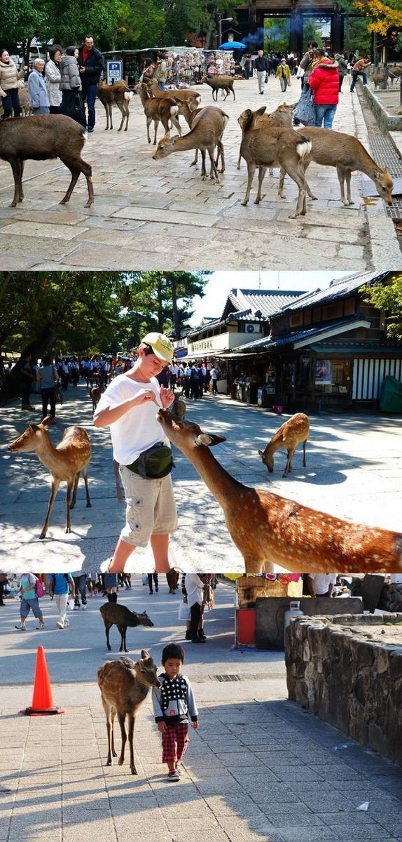 奈良の鹿3.jpg