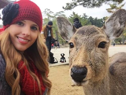 奈良の鹿6.jpg