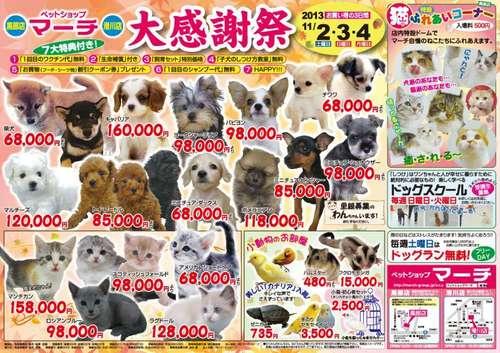 日本のペットショップ3.jpg