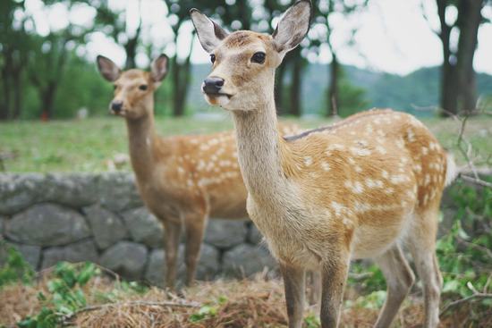 Lovepik_com-500647851-japan-nara-deer-park-lawn_.jpg