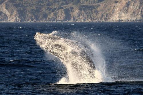 whale-3873512_640.jpg